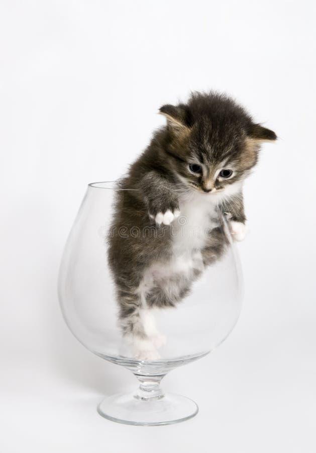 Das Kätzchen stockfotografie