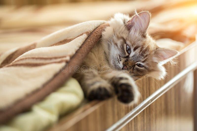 Das Kätzchen liegt auf dem Bett zu Hause lizenzfreie stockfotografie