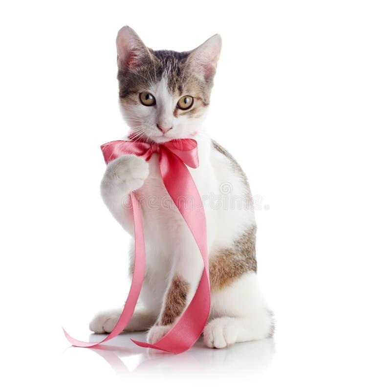 Das Kätzchen mit einem rosa Band lizenzfreie stockfotografie