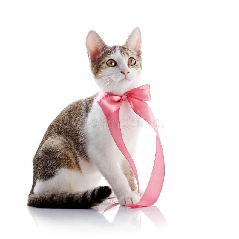 Das Kätzchen mit einem rosa Band lizenzfreies stockbild