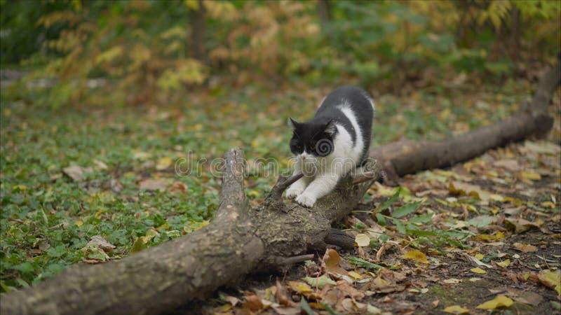 Das Kätzchen steht auf seinen Hinterbeinen und schärft seine Greifer gegen den Baum Katze schärft Greifer auf einem Lügenbaum lizenzfreie stockfotos