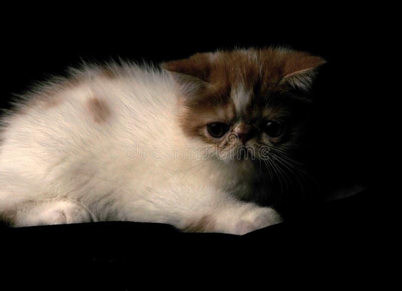 Das Katze Garfield-Haustier lizenzfreie stockfotos