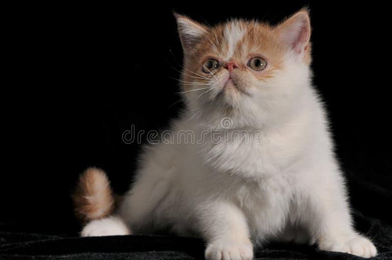 Das Katze Garfield-Haustier lizenzfreie stockfotografie