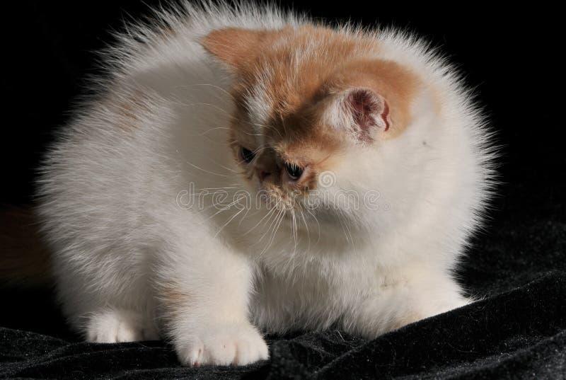 Das Katze Garfield-Haustier lizenzfreies stockbild