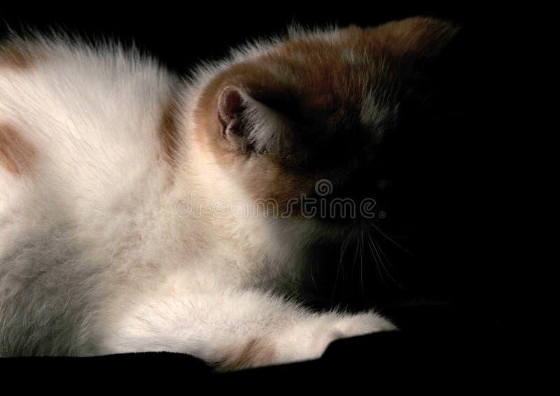 Das Katze Garfield-Haustier stockfotos