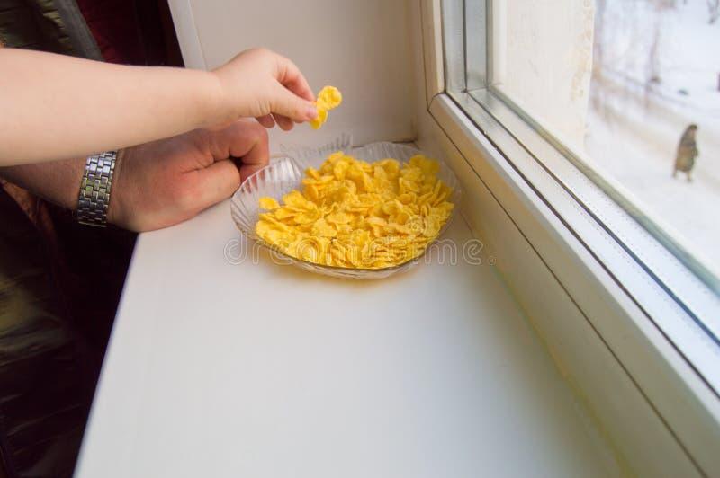 Das Kind erreichte für das Getreide, einen kleinen Jungen und einen gewachsenen Mann, die am Fenster stehen stockfotos
