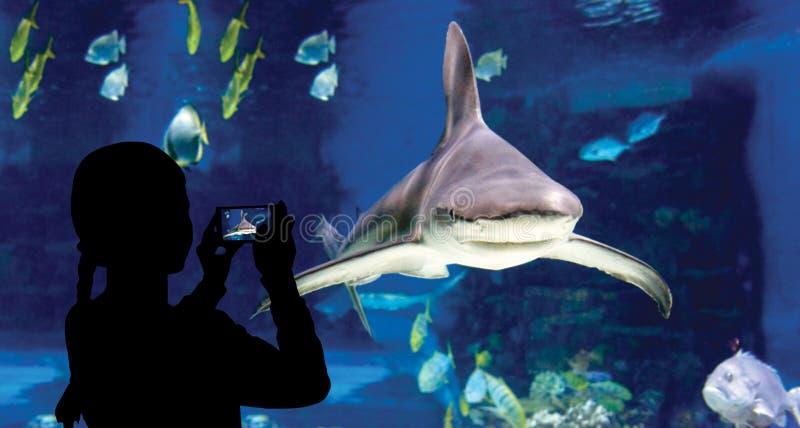 Das Kind macht die Fotohaifischschwimmen im oceanarium stockfotos