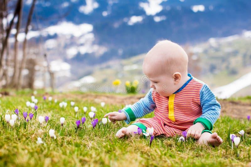 Das kleine Baby, das mit Krokus spielt, blüht in den Alpenbergen lizenzfreie stockfotos