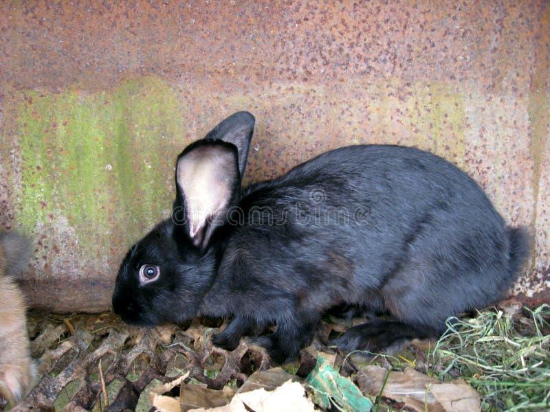 Das kleine nette Kaninchen hinter einer Stange lizenzfreie stockfotos