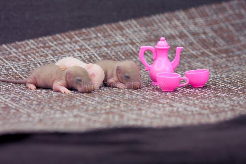 Das Konzept einer M?useteeparty Wenig Ratten mit Babytellern lizenzfreies stockbild