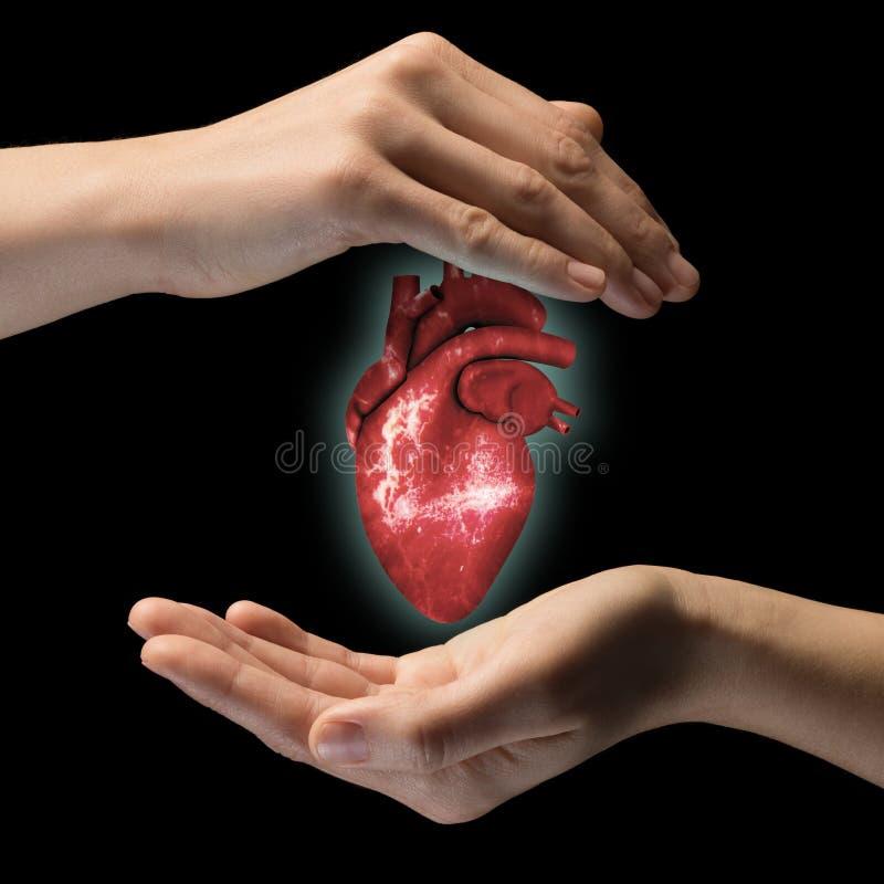 Das Konzept eines gesunden Herzens lizenzfreies stockfoto