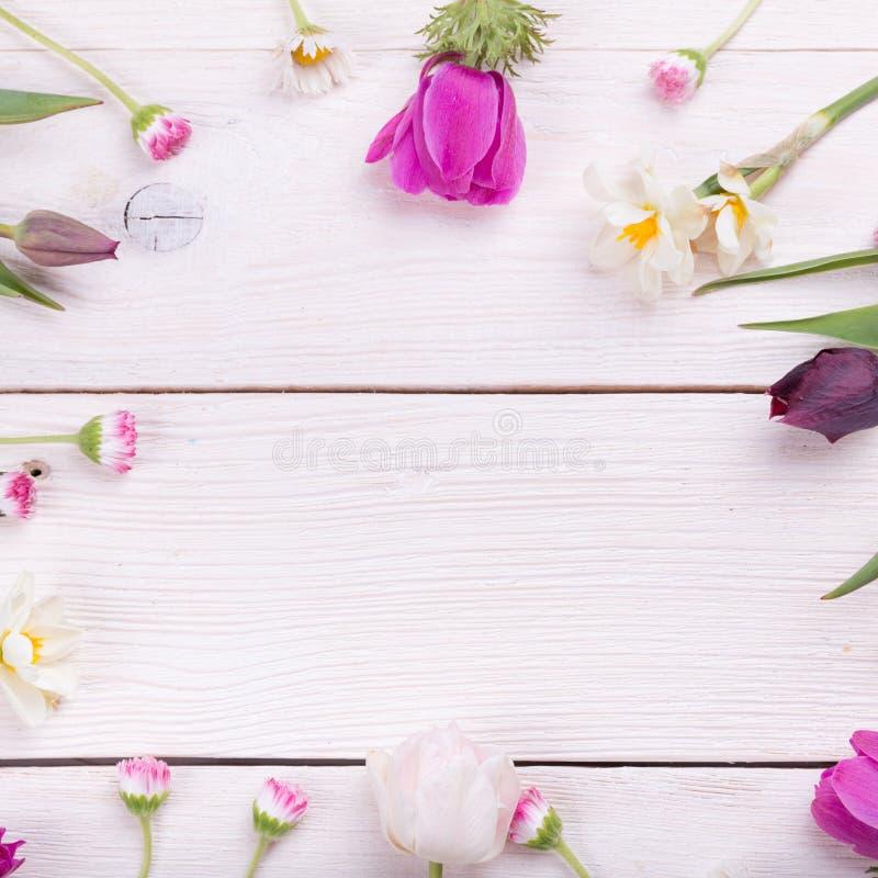 Das kreative Muster, das vom bunten Frühling gemacht wird, blüht mit Kopienraum Minimale Art Flache Lage lizenzfreie stockfotos