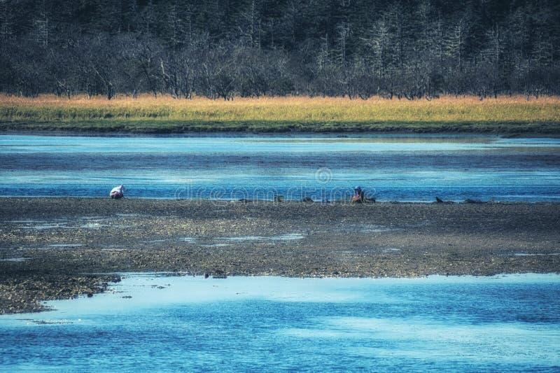 Das Kushiro-Sumpfgebiet, Kushiro, Hokkaido, Japan lizenzfreies stockbild