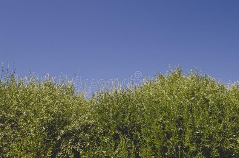 Das lange grüne Gras, das entlang dem Ufer wächst lizenzfreie stockfotos