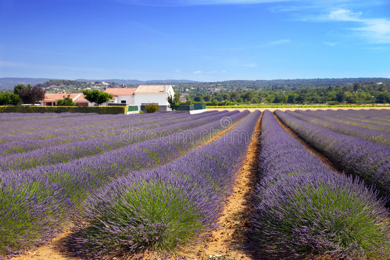 Das Lavendelackerland in Provence lizenzfreie stockfotografie