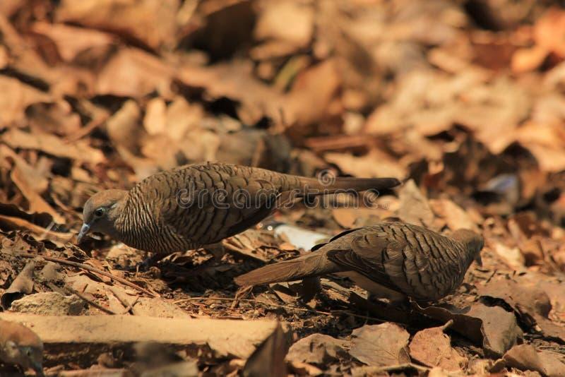Das Leben der Vögel im Wald stockfoto
