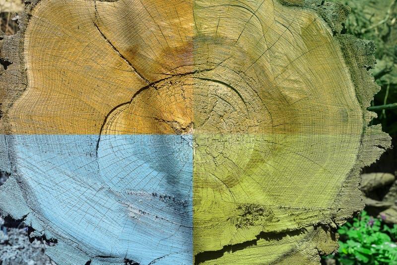Das Leben eines beständigen Baums ist Winter, Frühling, Sommer, Herbst lizenzfreies stockbild