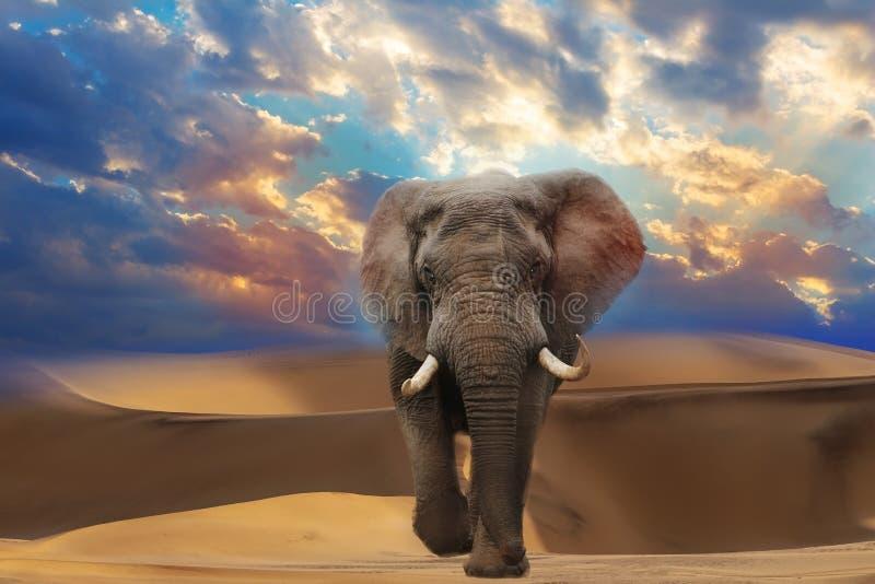 Das lephant in der Namibischen Wüste mit schönen Linien und Farben bei Sonnenaufgang lizenzfreies stockfoto
