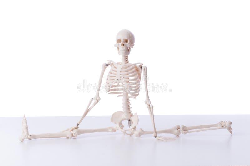 Das lustige Skelett lokalisiert auf Weiß stockfotos