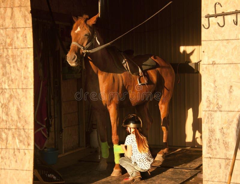 Das Mädchen, das ihr Pferd gesattelt erhält und bereiten vor, um zu reiten stockbilder