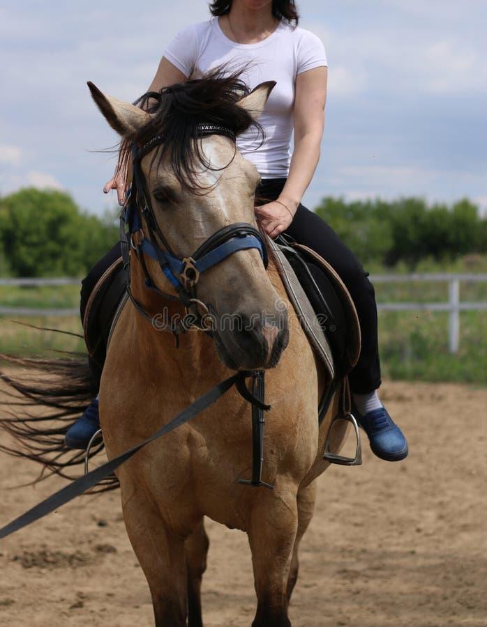 Das Mädchen fährt auf ein braunes Pferd stockbilder