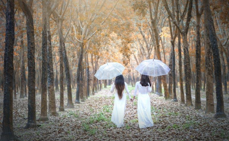 Das Mädchen mit zwei Vietnamesen im traditionellen langen Kleid oder AO Dai gehen zum Ende der Straße im Gummiwald lizenzfreie stockbilder