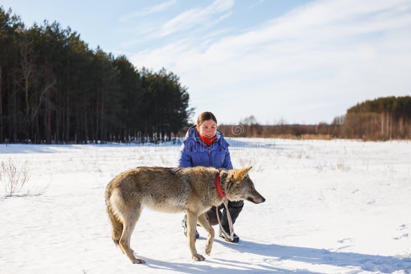 Das Mädchen nimmt an der Ausbildung eines grauen Wolfs auf einem schneebedeckten und sonnigen Gebiet teil stockfotografie