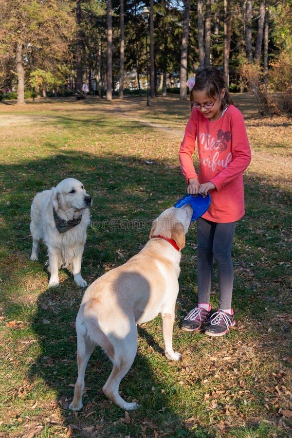 Das Mädchen spielt mit einem Hundgolden retriever und einem Frisbee im Park stockfotos