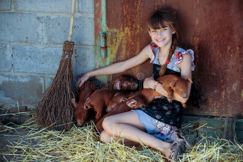 Das Mädchen spielt mit roten neugeborenen Schweinen der Duroczucht Das Konzept von mitfühlendem und von Interessieren für Tiere stockfoto
