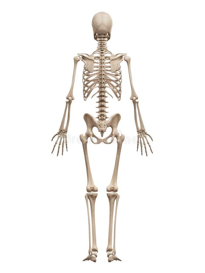 Groß Anatomie Und Physiologie Des Skeletts Galerie - Anatomie Ideen ...