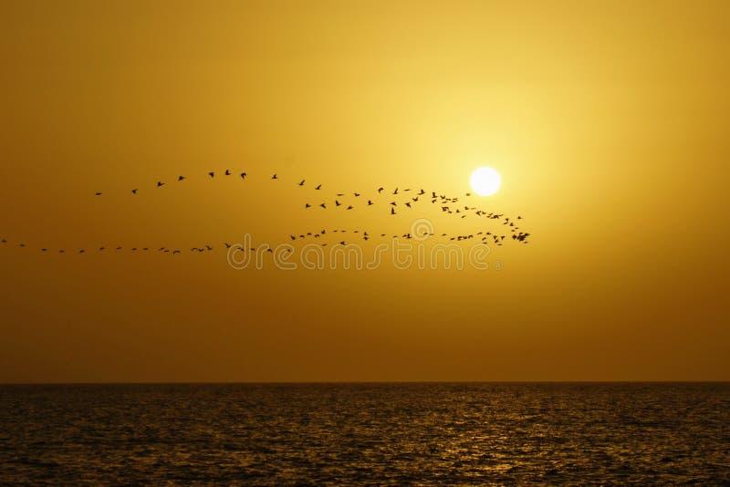 Das Meer, der Flug des Vogels gegen eine Abnahme lizenzfreie stockbilder
