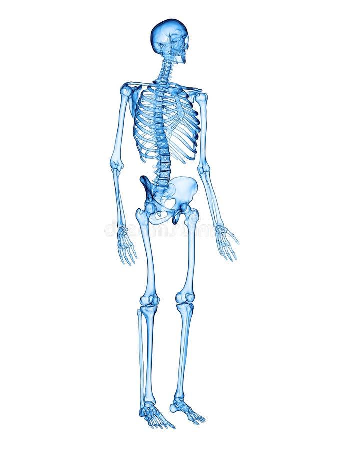 Niedlich Diagramm Eines Skeletts Bilder - Anatomie Ideen - finotti.info