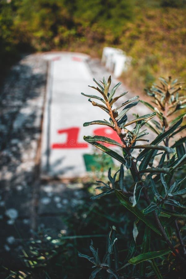 Das minigolf in Domburg versteckt in den Dünen, die Niederlande lizenzfreie stockfotos