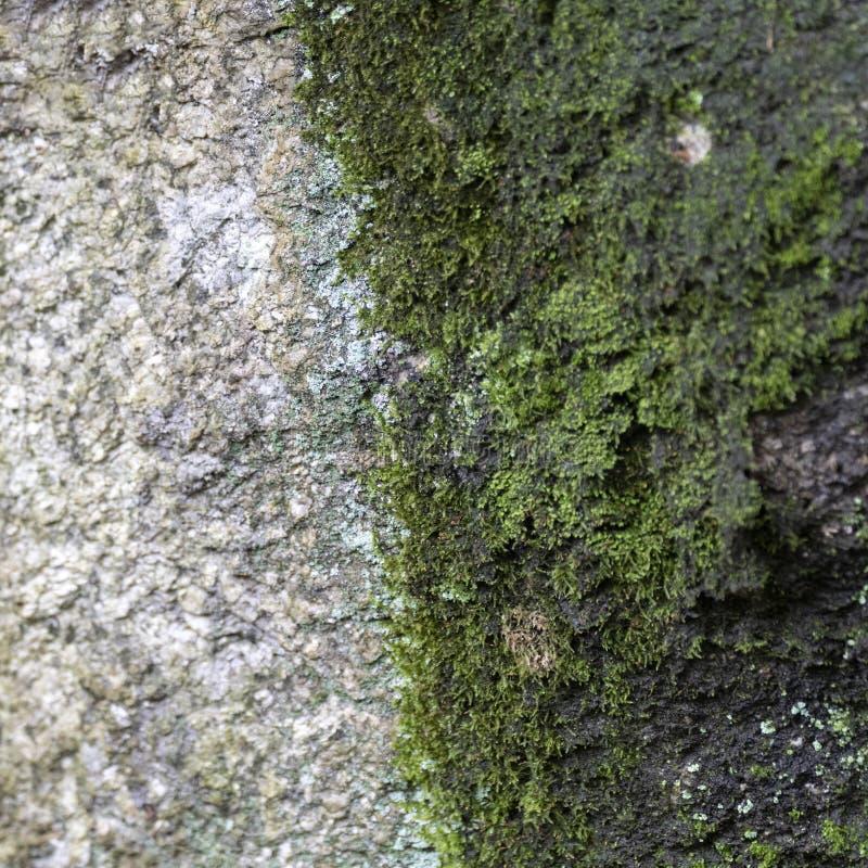 Das Moos auf der Oberfläche des Felsens lizenzfreie stockfotos