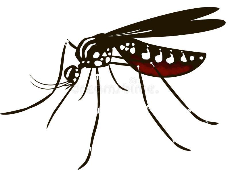 Das Moskito Aedes stockfoto