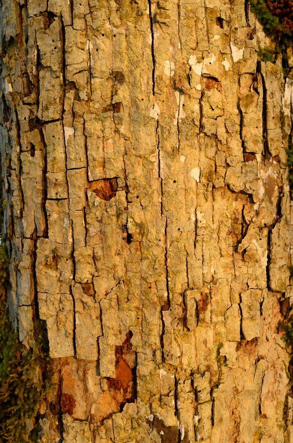 Das Muster der Baumrinde Hintergrund Schöne Beschaffenheit lizenzfreie stockfotografie