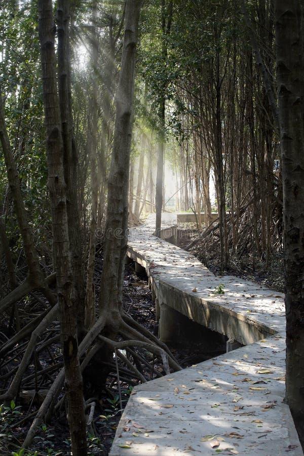 Das Natur-Ausbildungszentrum für Mangroven-Erhaltung und Umwelttourismus stockbilder