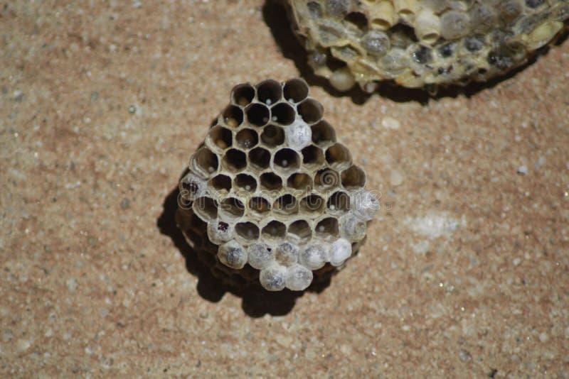 Das Nest stockbilder