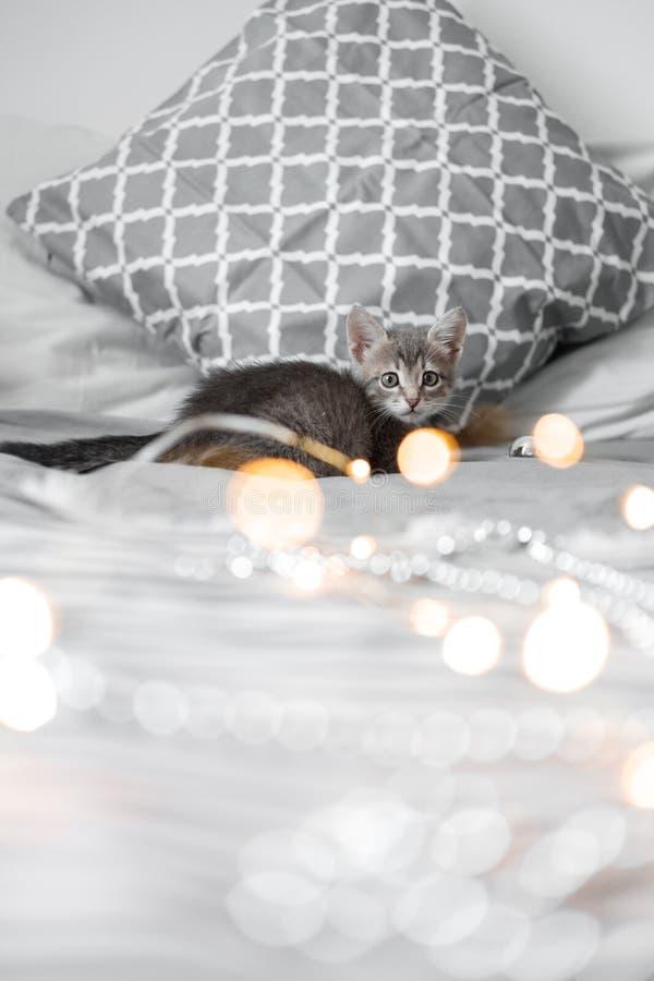 Das nette graue Kätzchen, das mit Weihnachten spielt, spielt auf einem bokeh Hintergrund lizenzfreies stockfoto