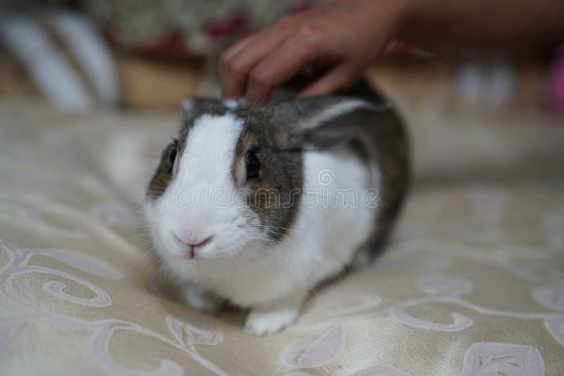 Das nette Kaninchen stockfotografie
