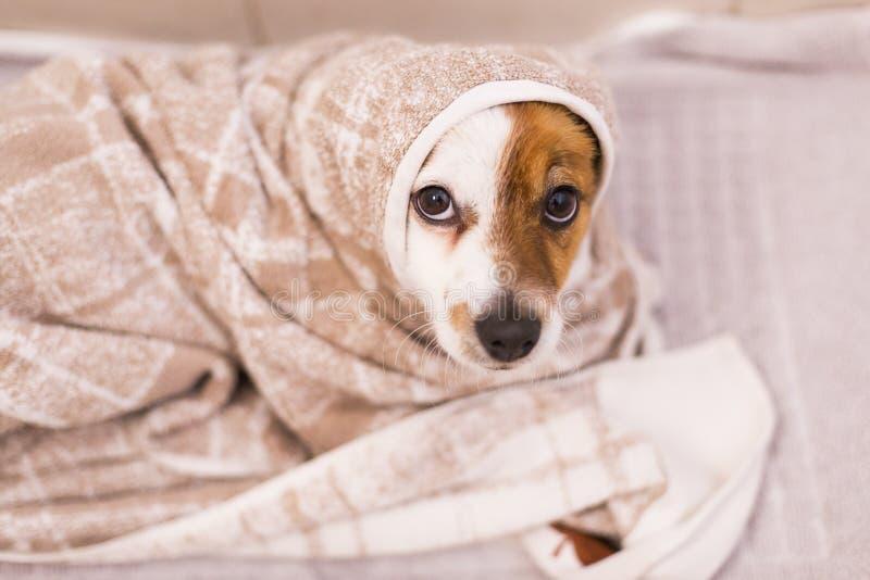 Das nette reizende kleine Hundeerhalten trocknete mit einem Tuch im Badezimmer stockfotografie