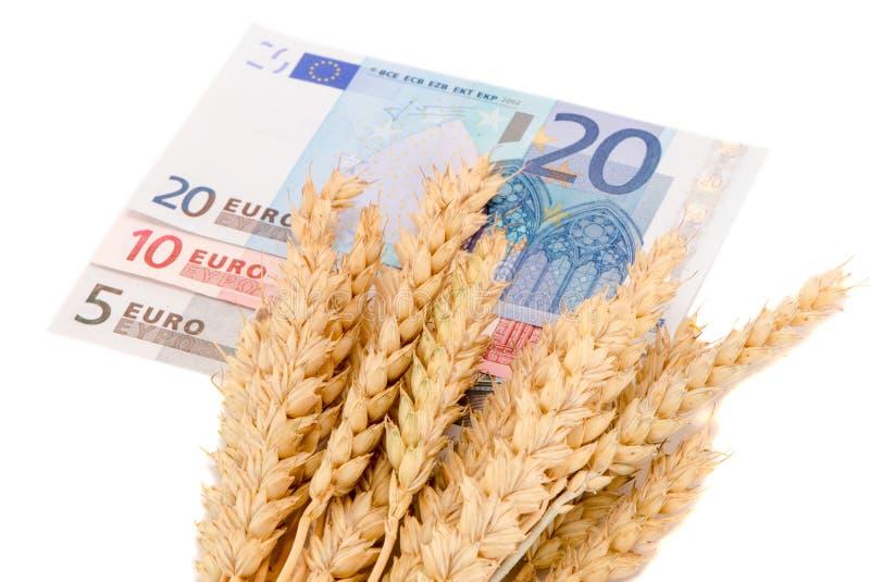Das orelhas maduras da colheita do trigo euro- cédulas isoladas fotografia de stock