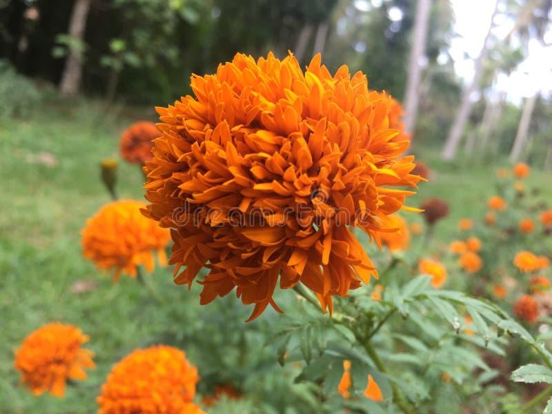 Das pethiya fotografia royalty free