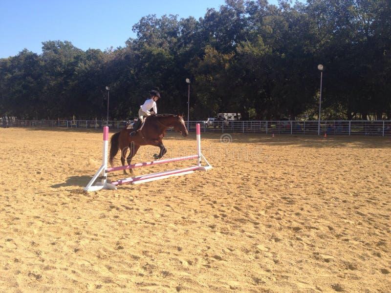 Das Pferd springend über Zaun lizenzfreie stockfotos
