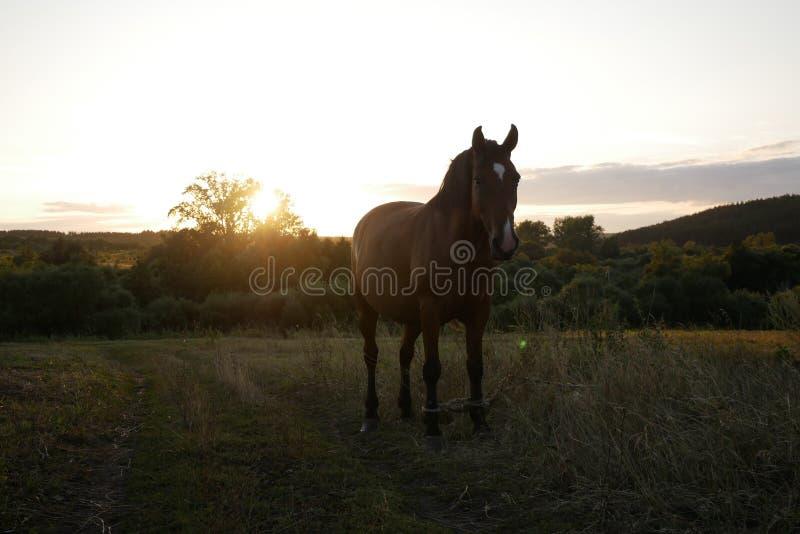 Das Pferd steht auf dem Feld lizenzfreie stockfotografie