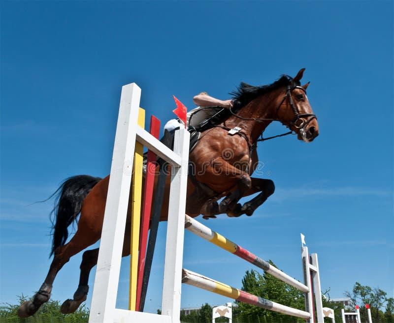 Das Pferdenspringen lizenzfreie stockfotos