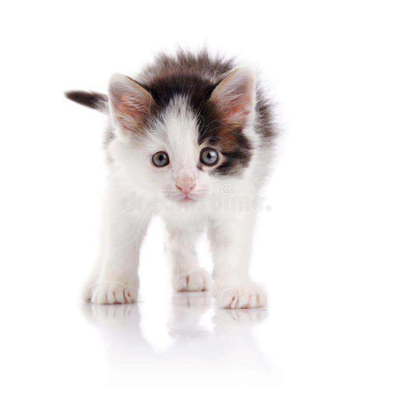 Das pickelige Kätzchen stockfotos