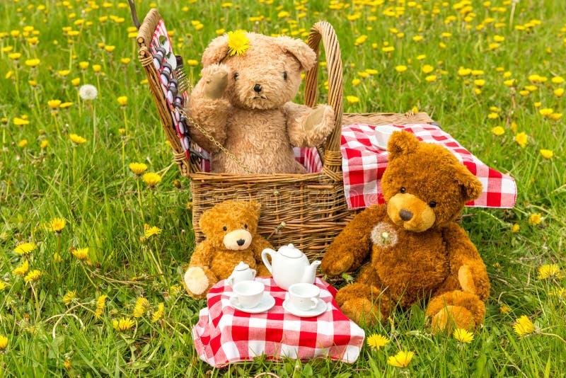Das Picknick des Teddyb?ren im Sommer mit hellem gelbem L?wenzahn lizenzfreies stockfoto