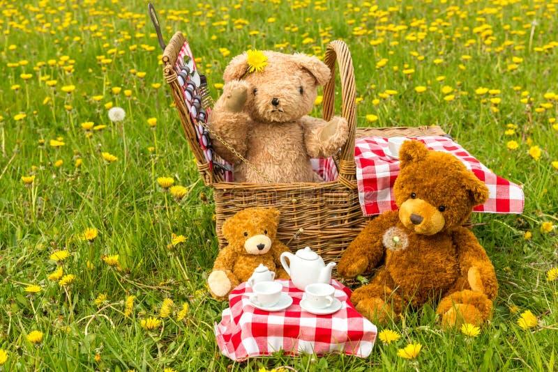 Das Picknick des Teddyb?ren im Sommer mit hellem gelbem L?wenzahn stockfotos
