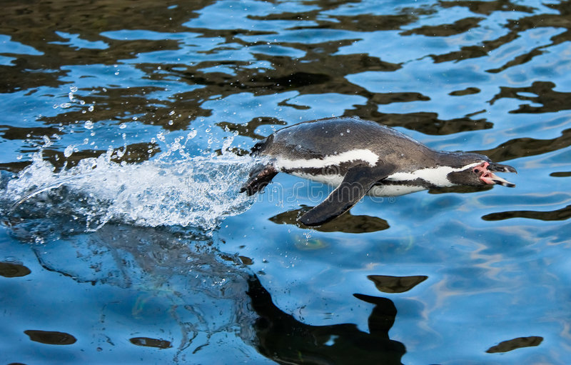 Das Pinguinspringen stockfotografie